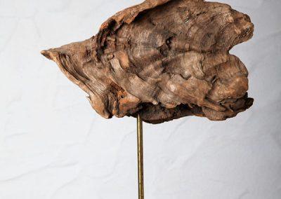 Lorbeerholz: Gomera 800 Jahre Wachstum